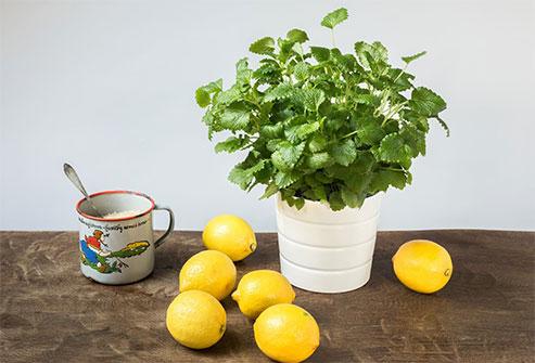 Citróny, citróny a citróny
